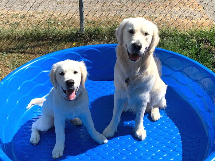 Dogs in Kiddie Pool